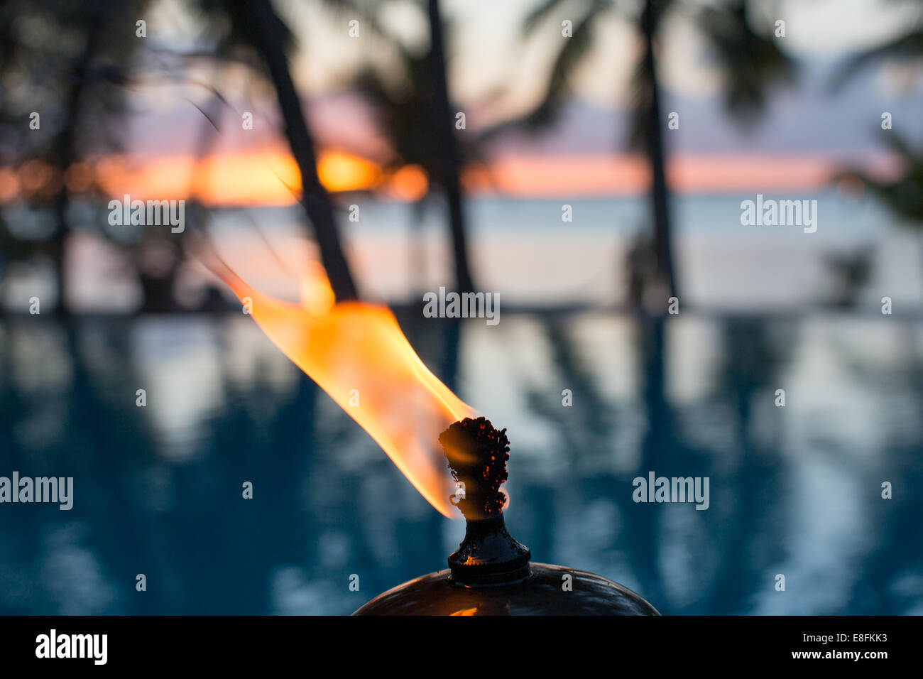 West Indies, Bahamas Fire And Palm Trees - Stock Image