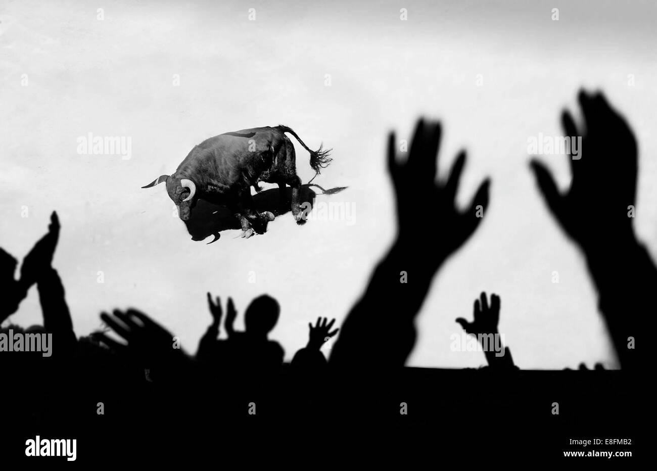 Spain, Crowd of people watching bull - Stock Image