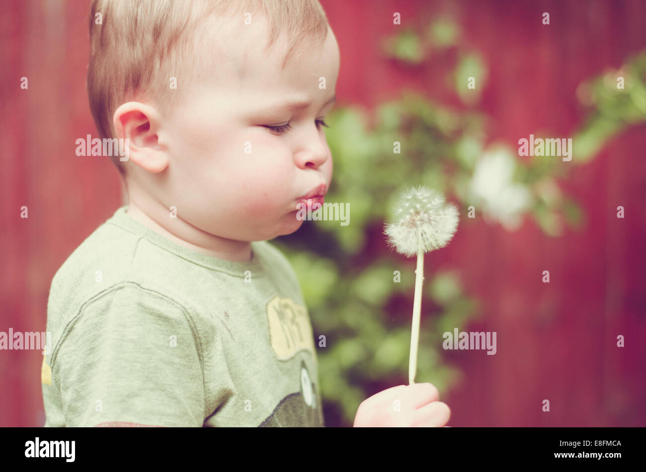 Baby boy blowing dandelion clock - Stock Image