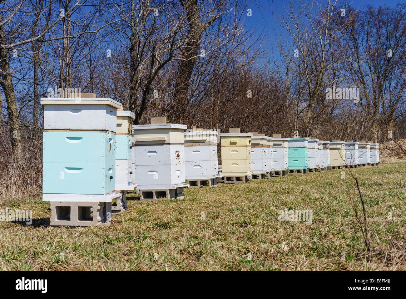 St. Charles, Kane County, Illinois, United States of America Apiary In Spring - Stock Image