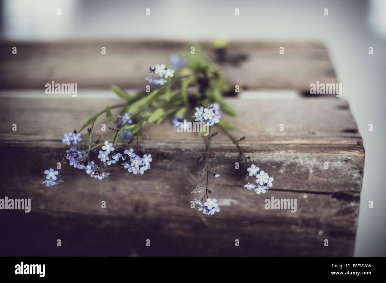 Forget-me-not flowers on old wooden box - Stock Image