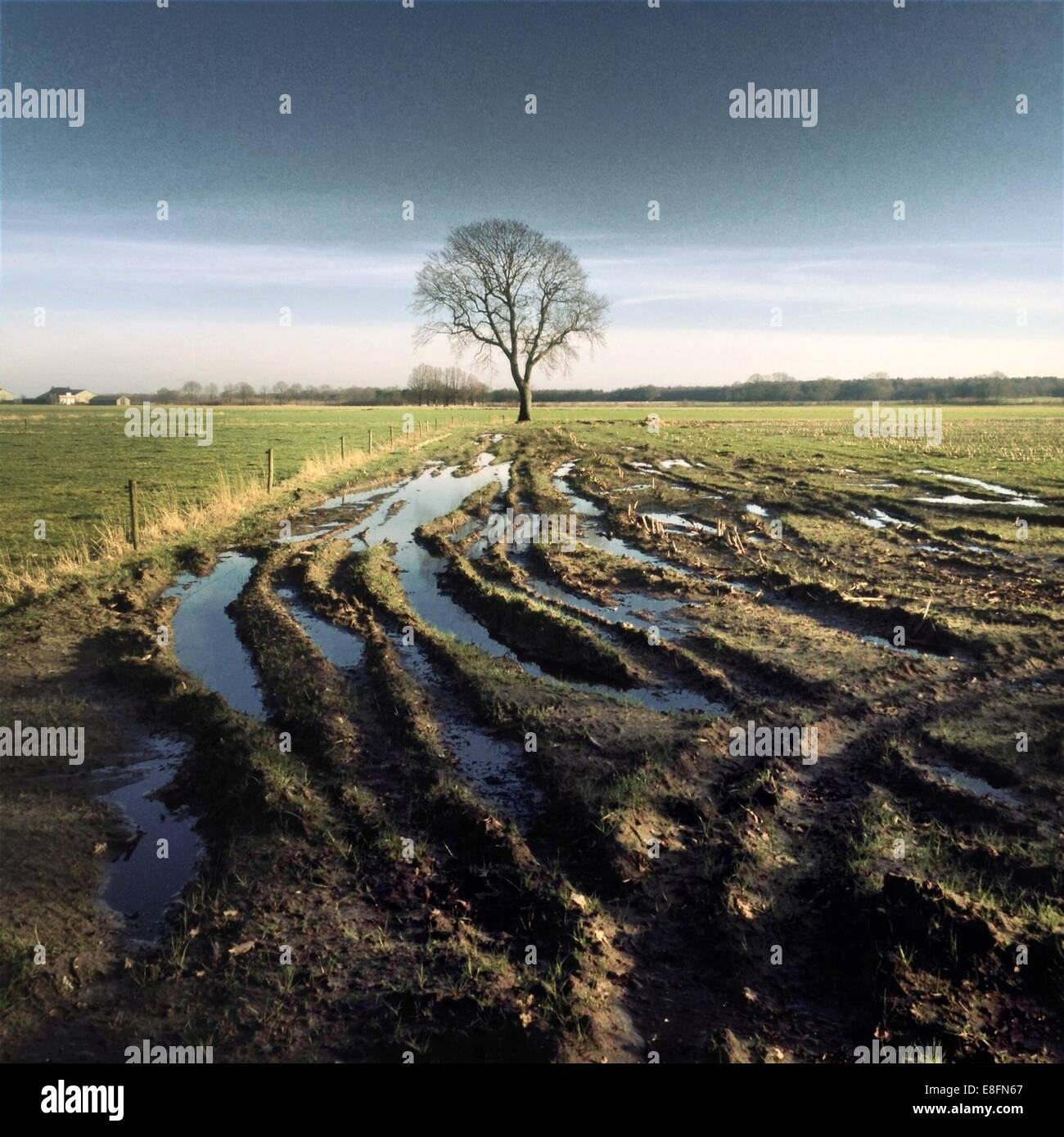Tire tracks in mud - Stock Image