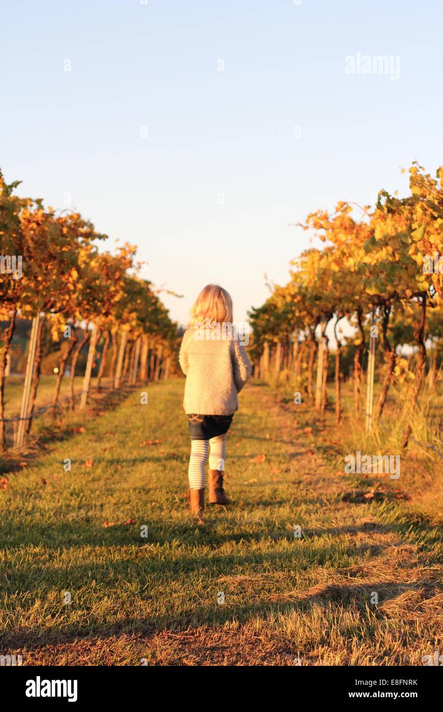 Girl walking though a vineyard - Stock Image