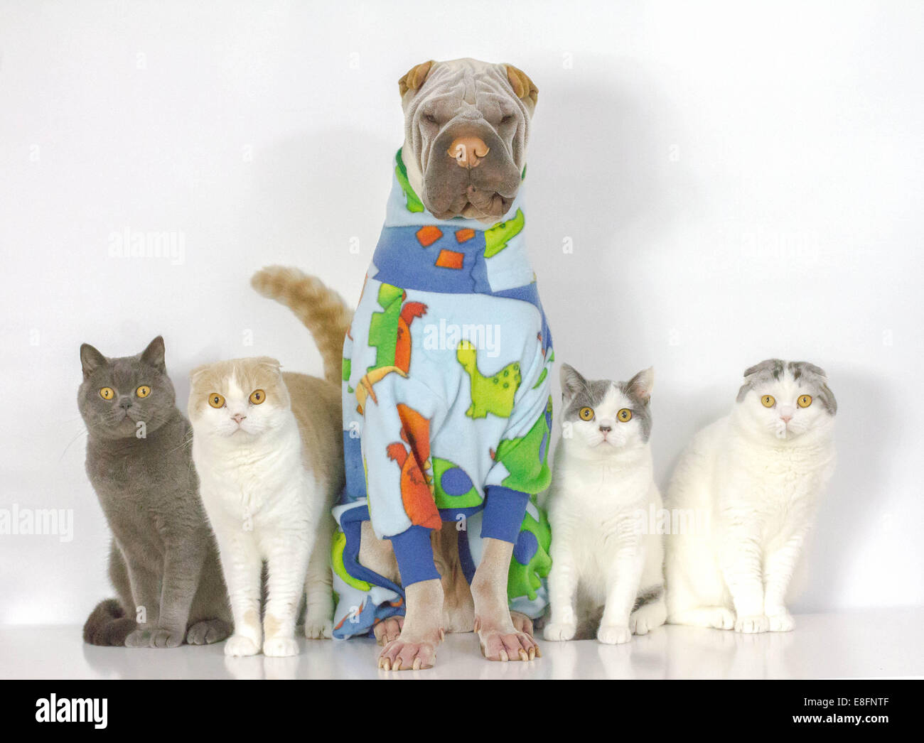 Portrait of dog and cats sitting together - Stock Image