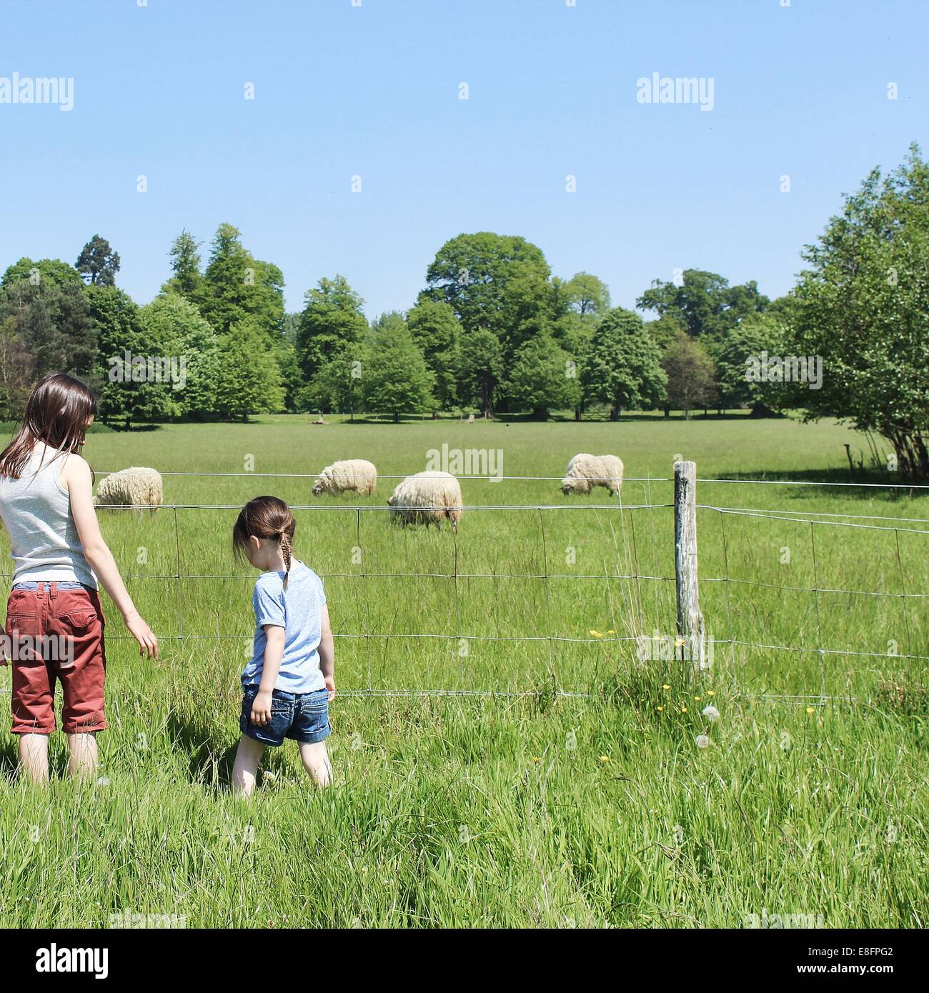 Rear view of two girls standing by fence looking at sheep - Stock Image