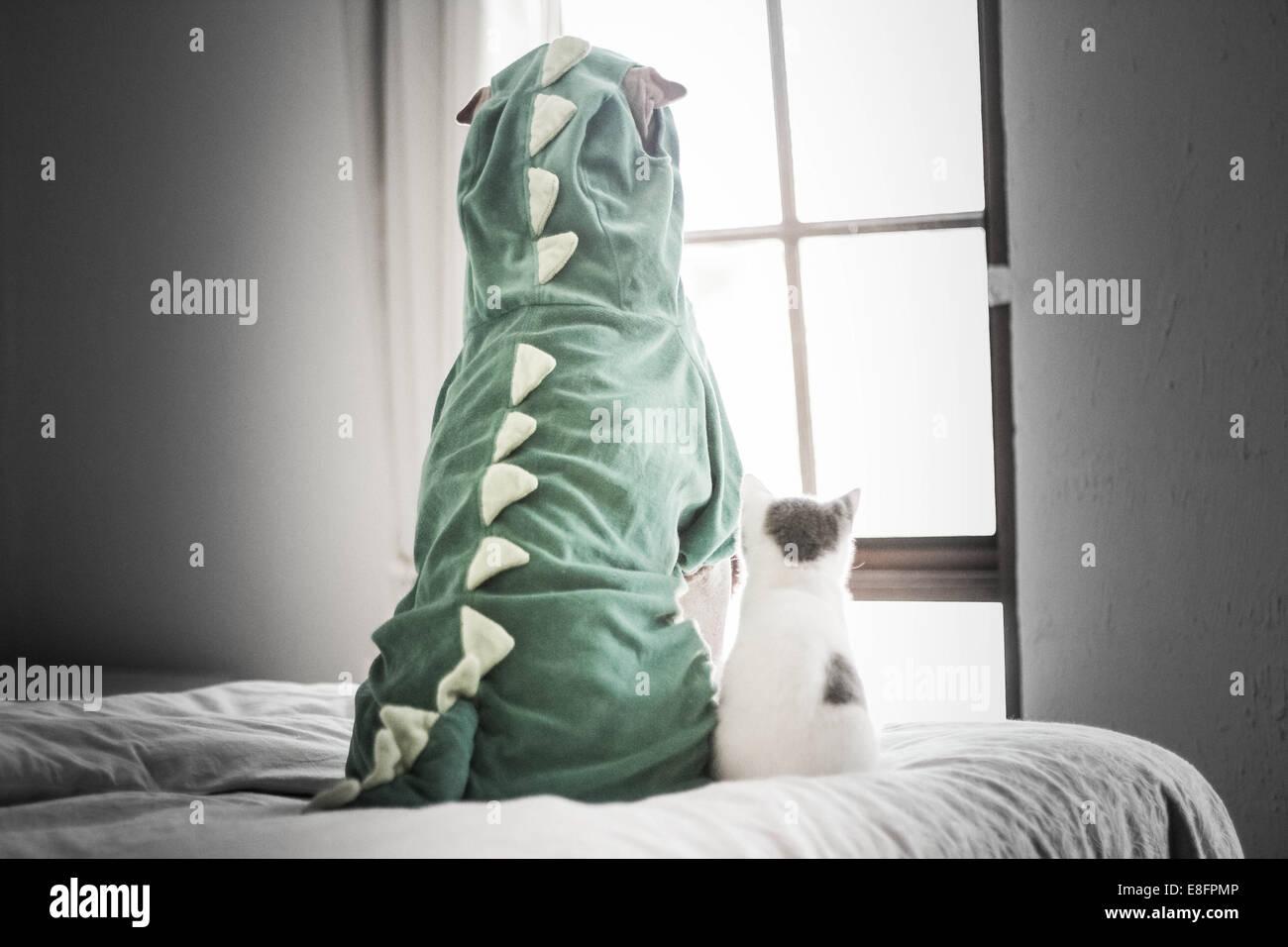 Shar pei in dinosaur costume and kitten looking through window - Stock Image