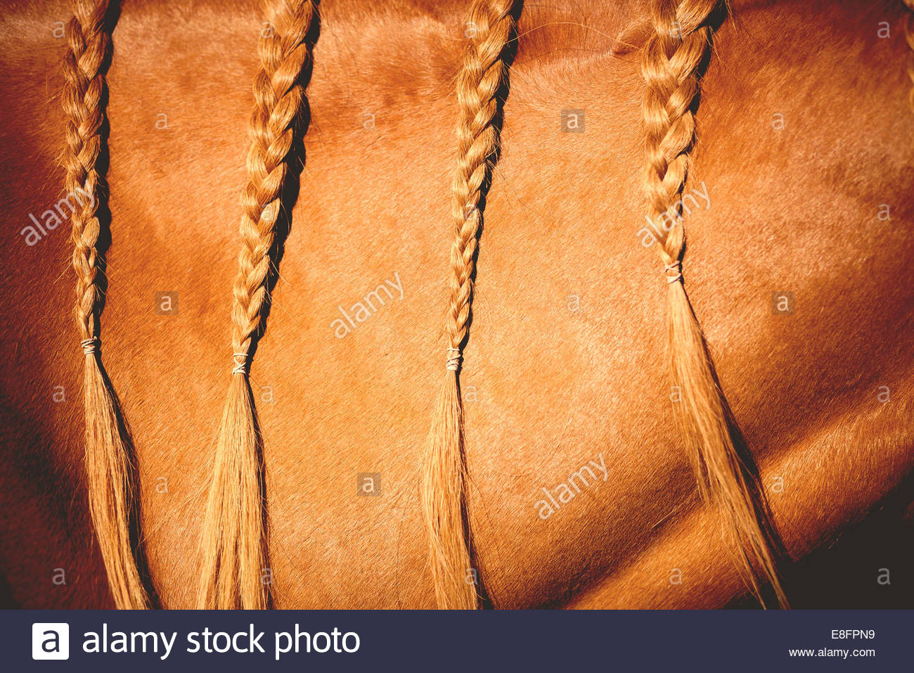 Close up of braided horse hair - Stock Image
