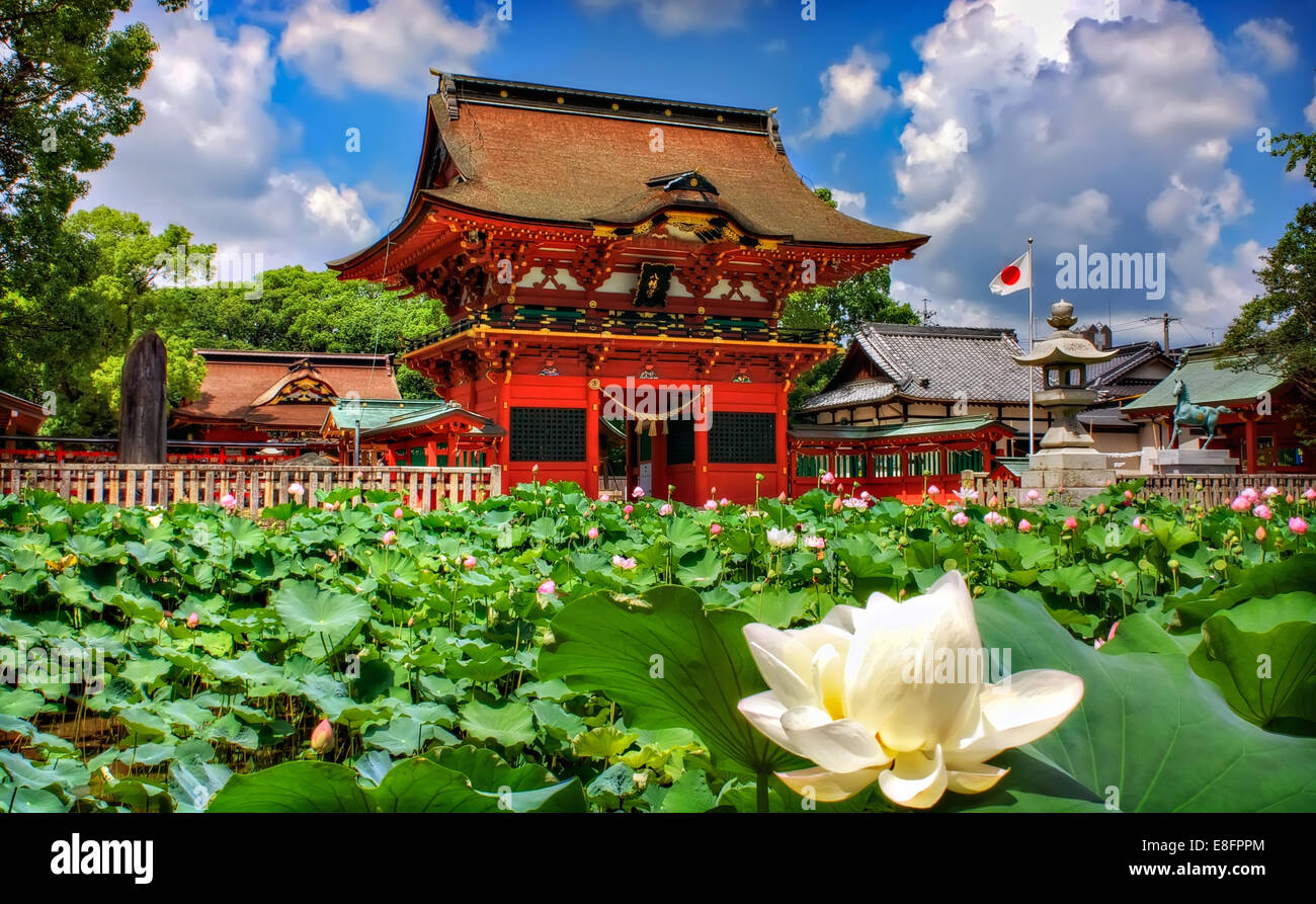 Lotus flower architecture stock photos lotus flower architecture japan chita okazaki lotus blossom in foreground and shinto shrine in background izmirmasajfo