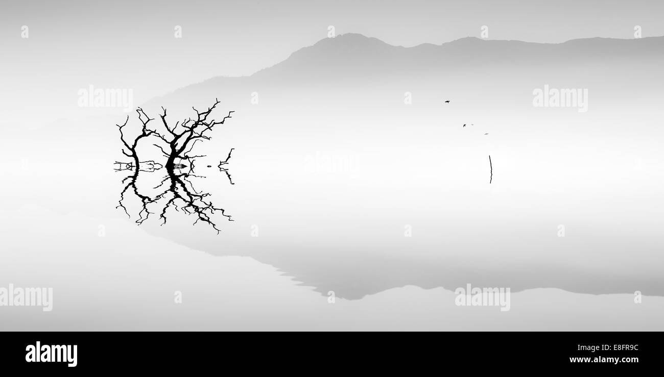 Silhouette of tree on misty lake - Stock Image