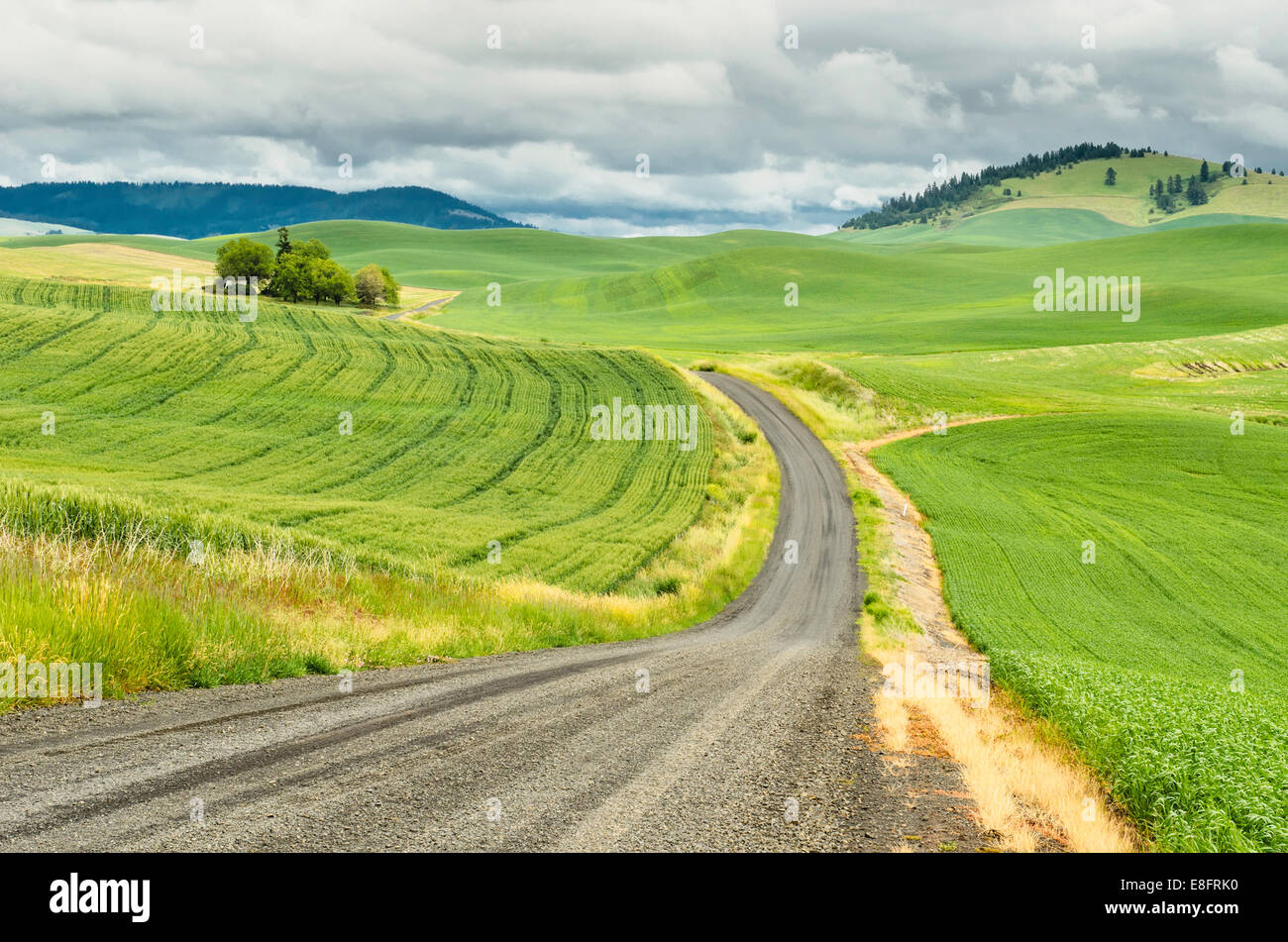 USA, Washington, Palouse, Winding country road - Stock Image
