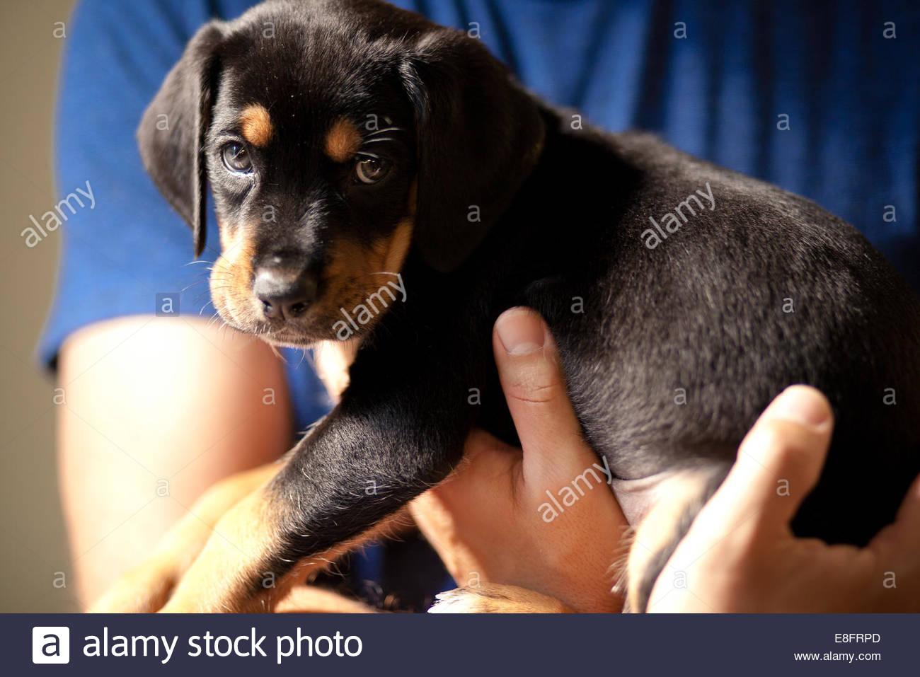 Man holding puppy dog - Stock Image