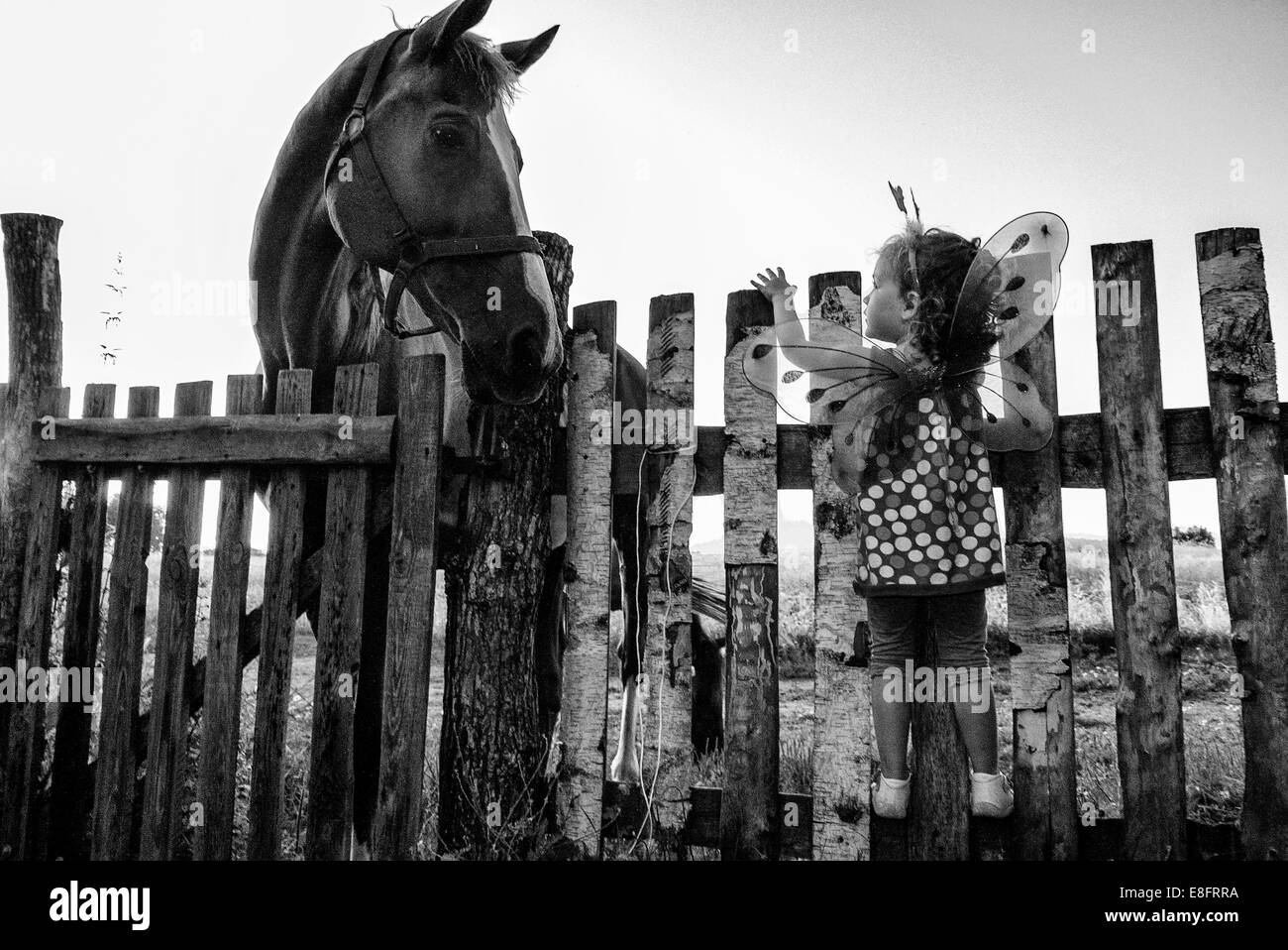 Girl (4-5) dressed as fairy looking at horse - Stock Image