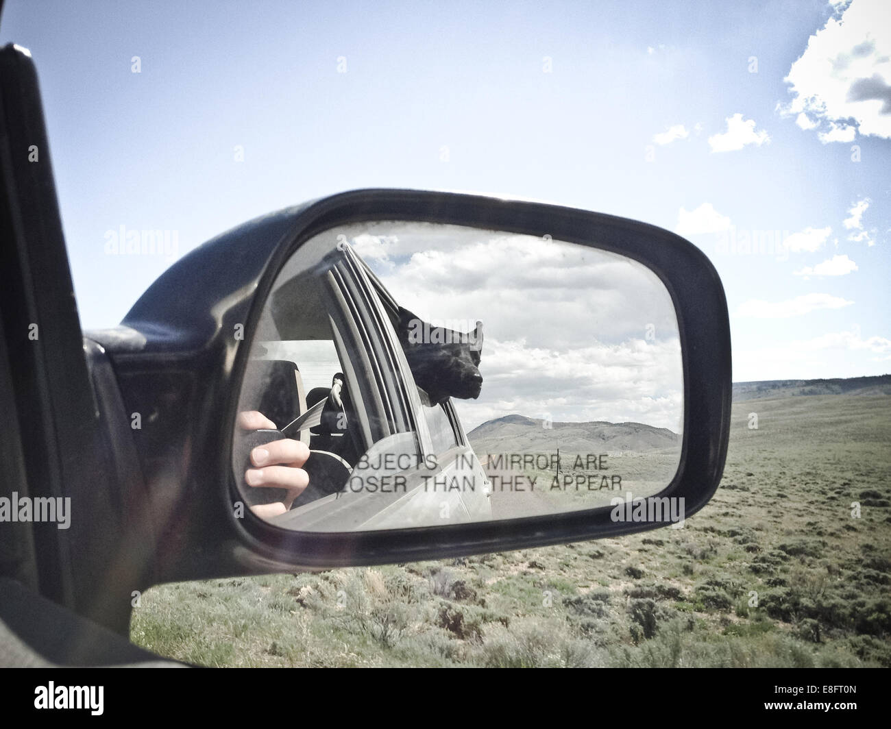 USA, Wyoming, Dog looking out car window - Stock Image