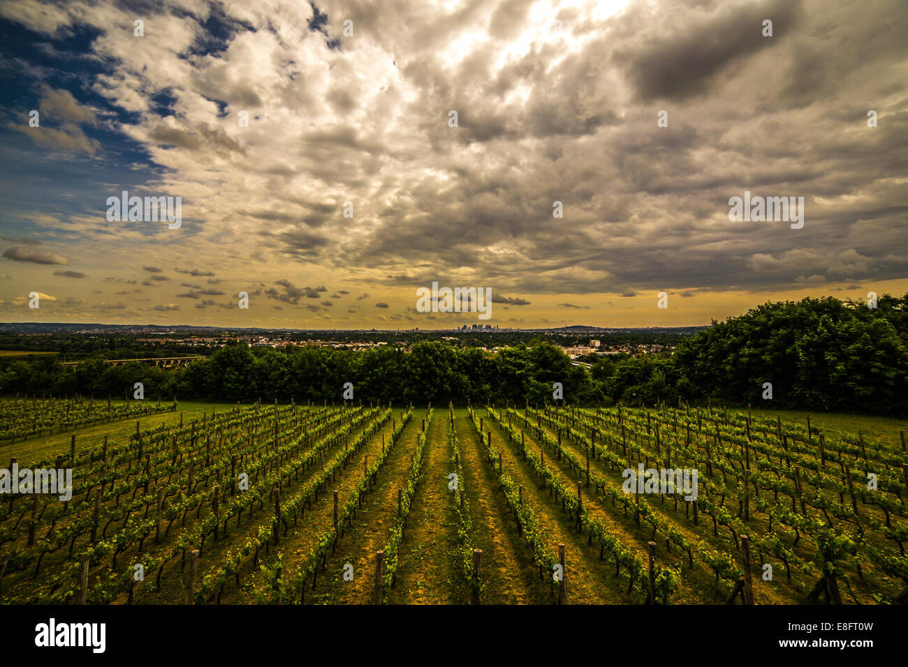 France, Paris, La Defense behind vines - Stock Image