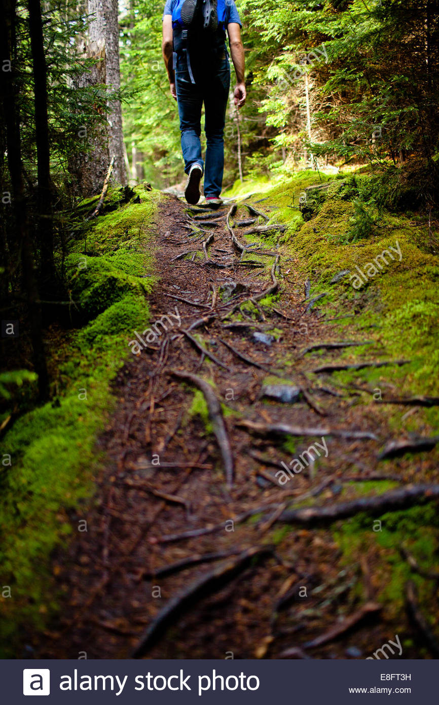 Rear view of Man hiking in forest, Maine, America, USA - Stock Image
