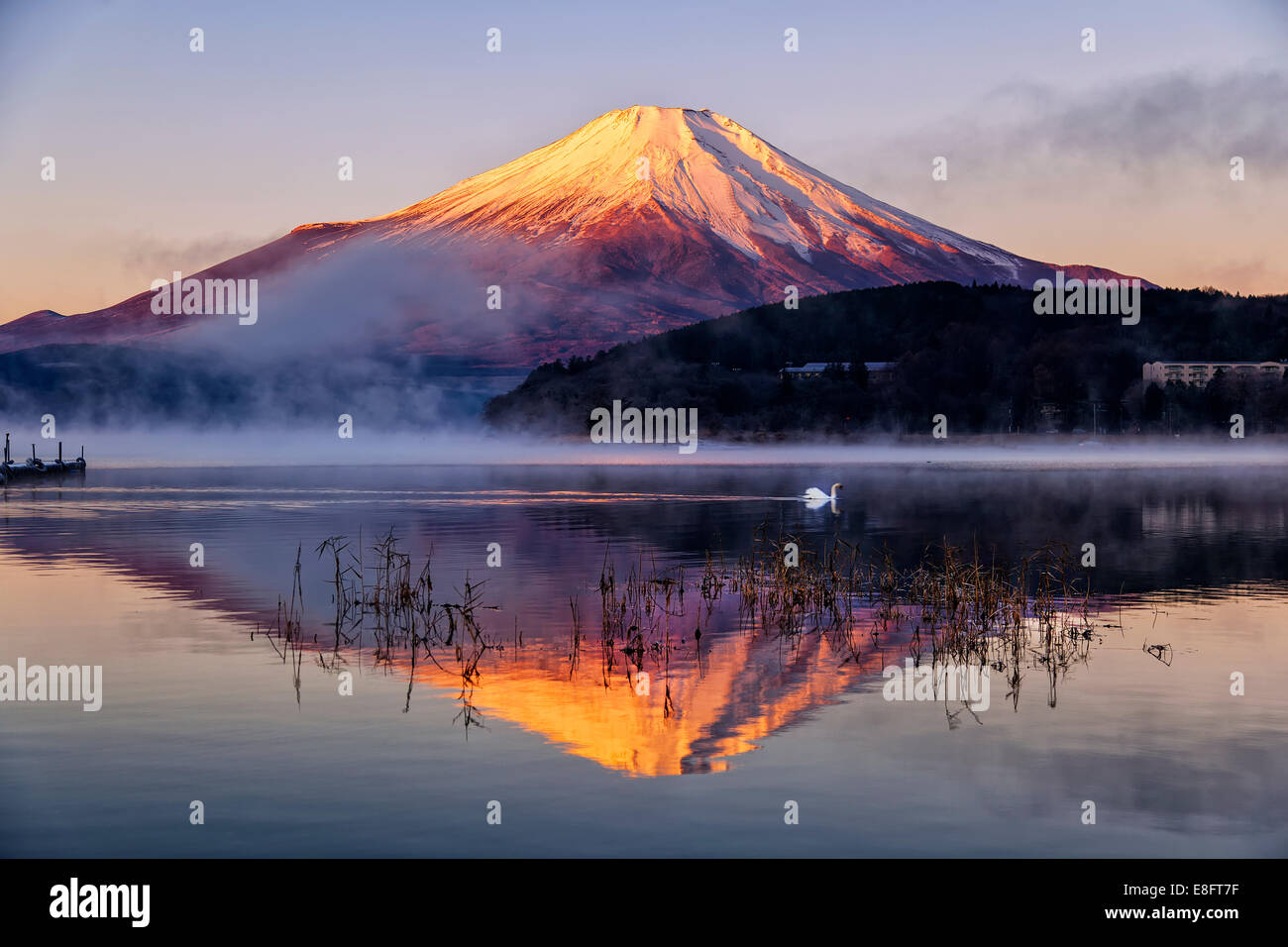 Japan, Mt.Fuji reflecting in Yamanaka lake - Stock Image