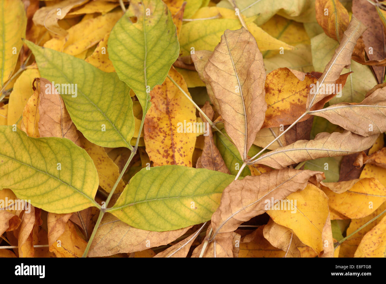 Heap of dried leaves. - Stock Image
