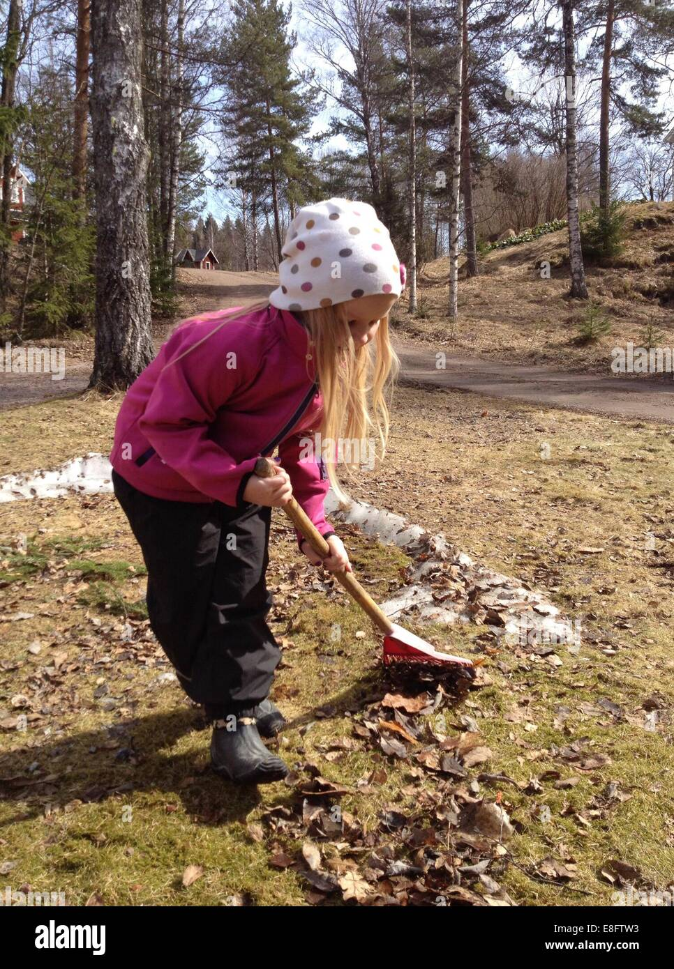 Sweden, Girl (6-7 years) raking leaves in garden - Stock Image