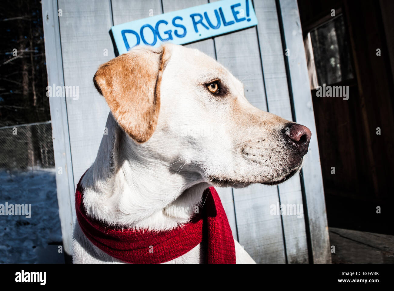 Dog standing in front of Dogs Rule sign - Stock Image