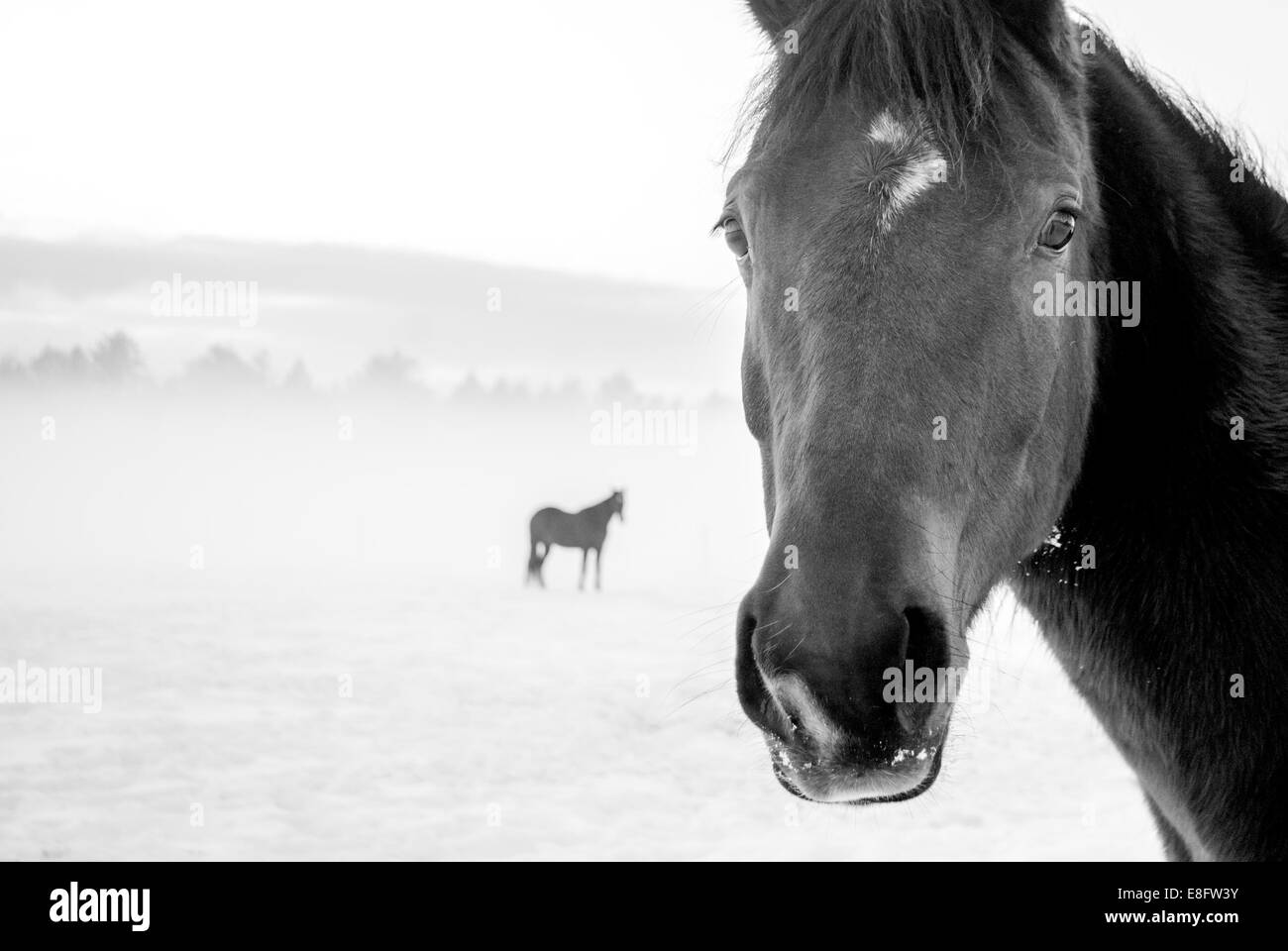 Horses in pasture - Stock Image