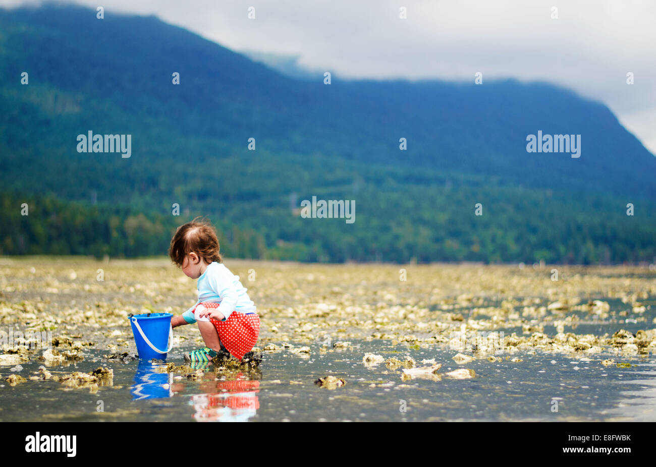 Girl (2-3 years) collecting things on beach - Stock Image