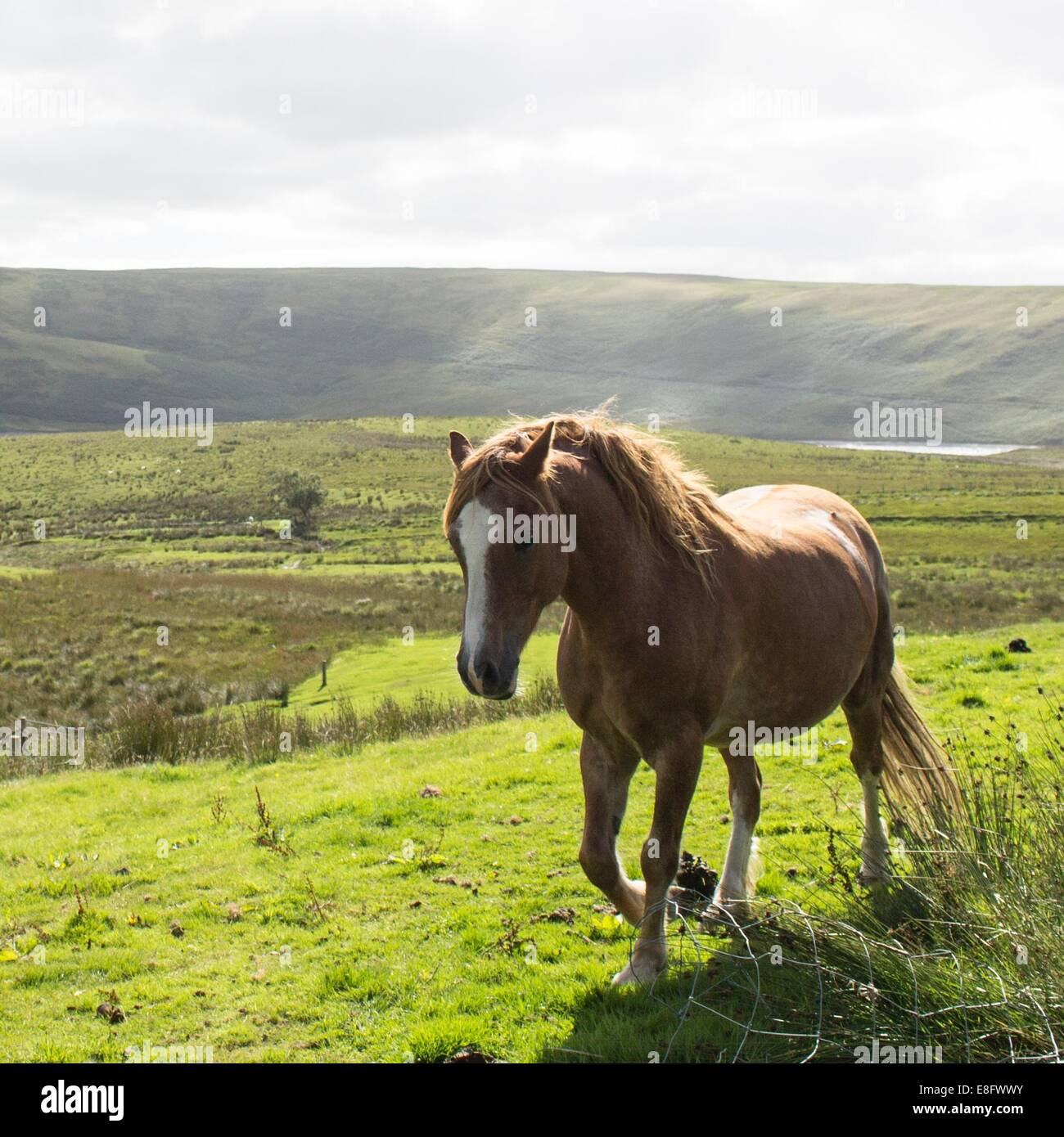 Horse in countryside Stock Photo