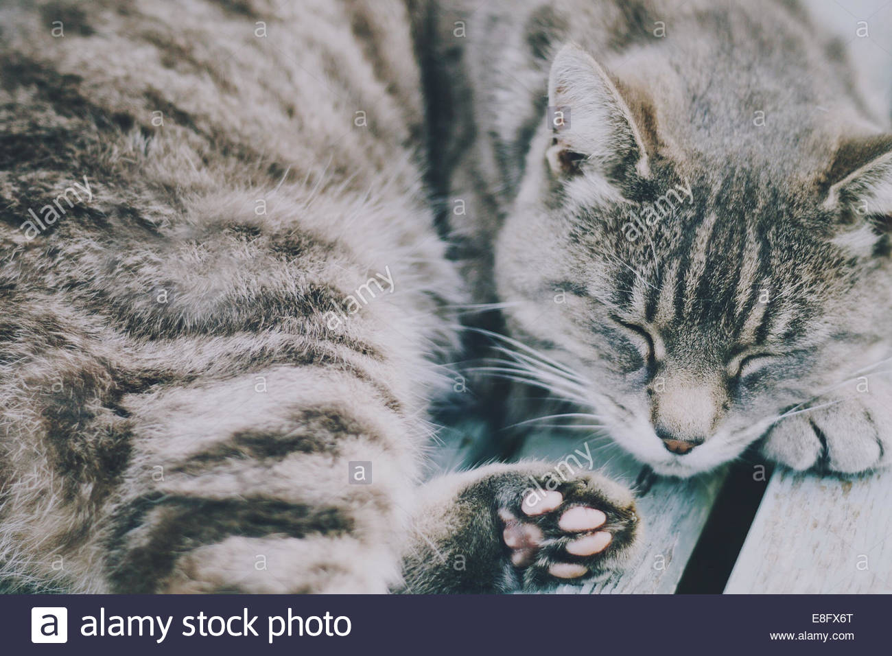UK, Grey tabby cat sleeping on bench - Stock Image