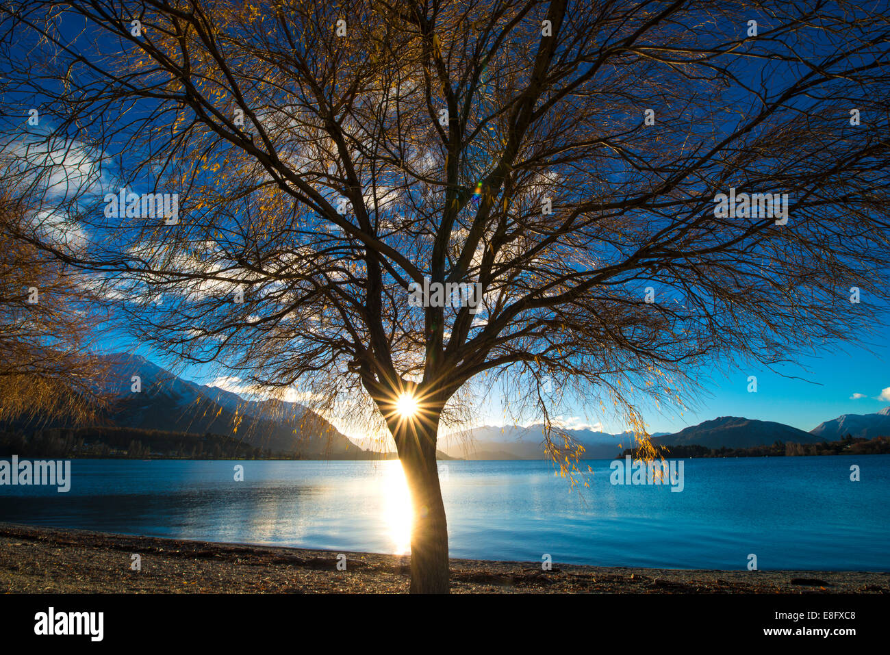 New Zealand, Lake Wanaka, Sun shining through tree - Stock Image
