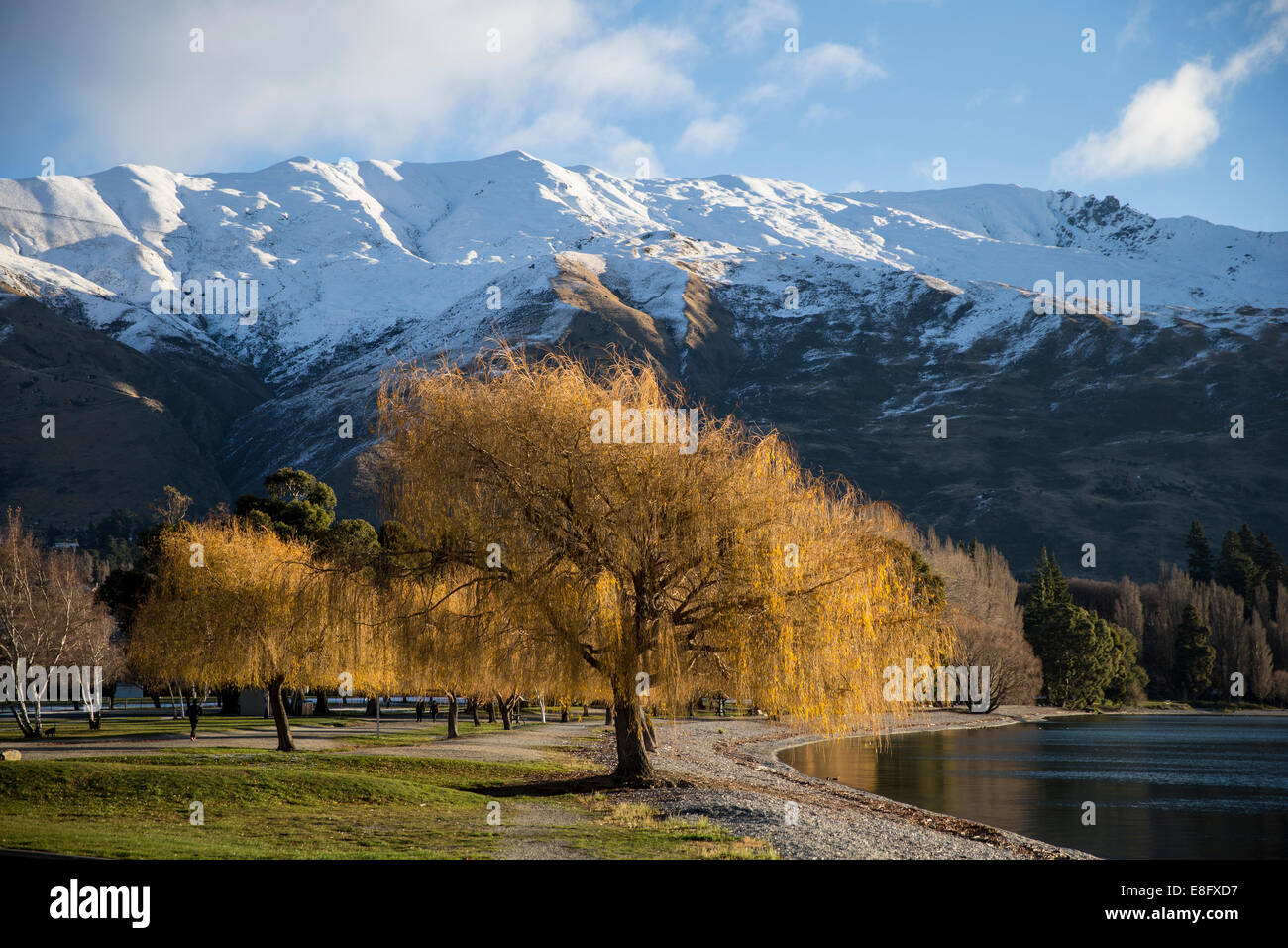 New Zealand, Landscape with snowcapped mountains - Stock Image
