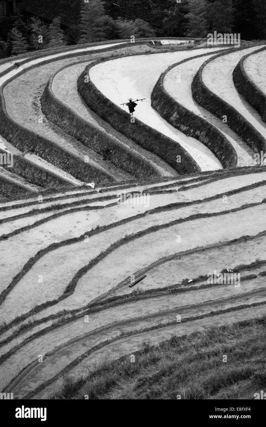 China, Guangxi, Guilin City, Longsheng Various Nationalities Autonomous County, Longji, Elevated view of rice paddies - Stock Image