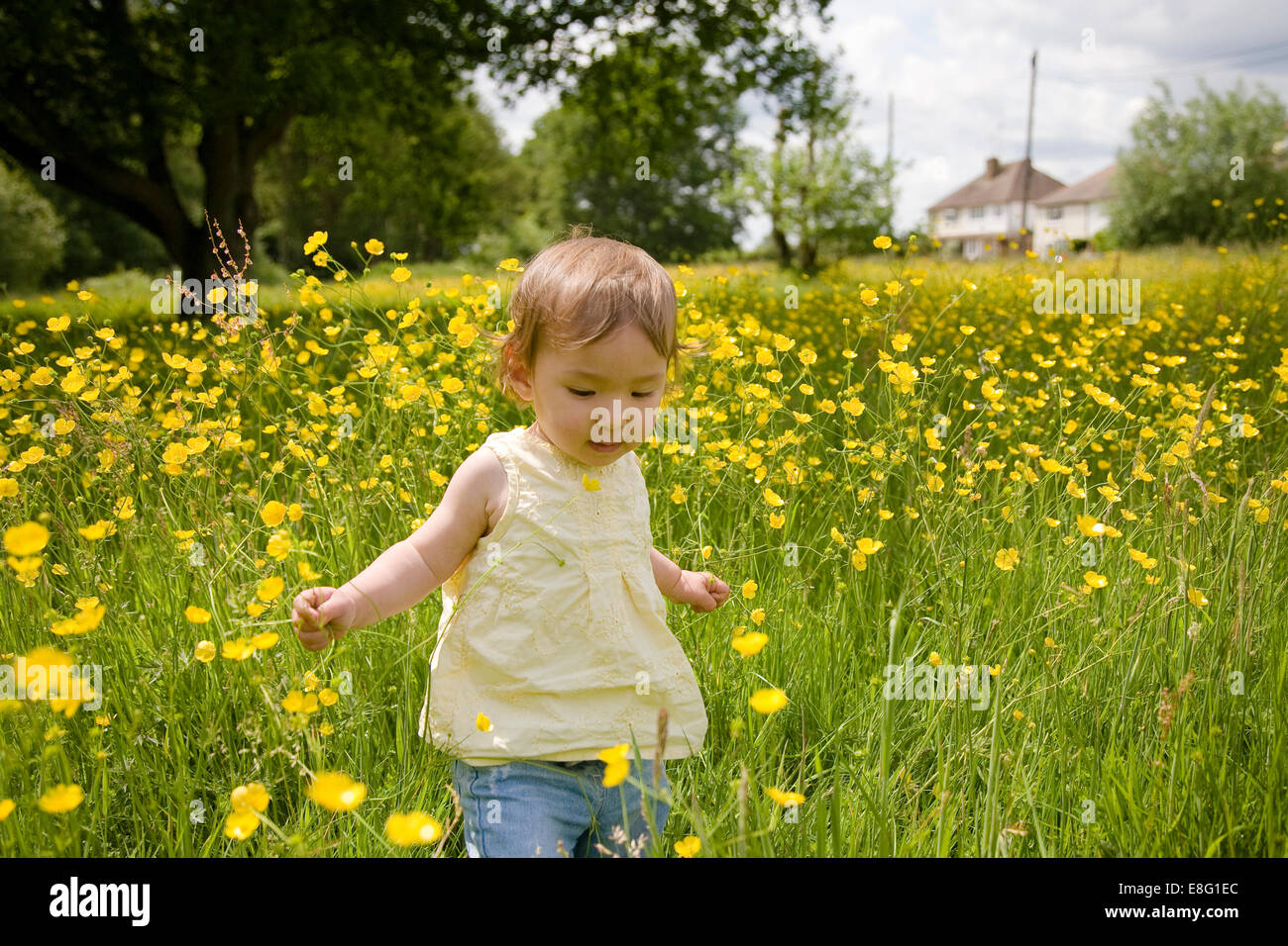 a mixed ethnicity (East Asian / caucasian) female toddler walking alone in an English meadow of buttercups - Stock Image