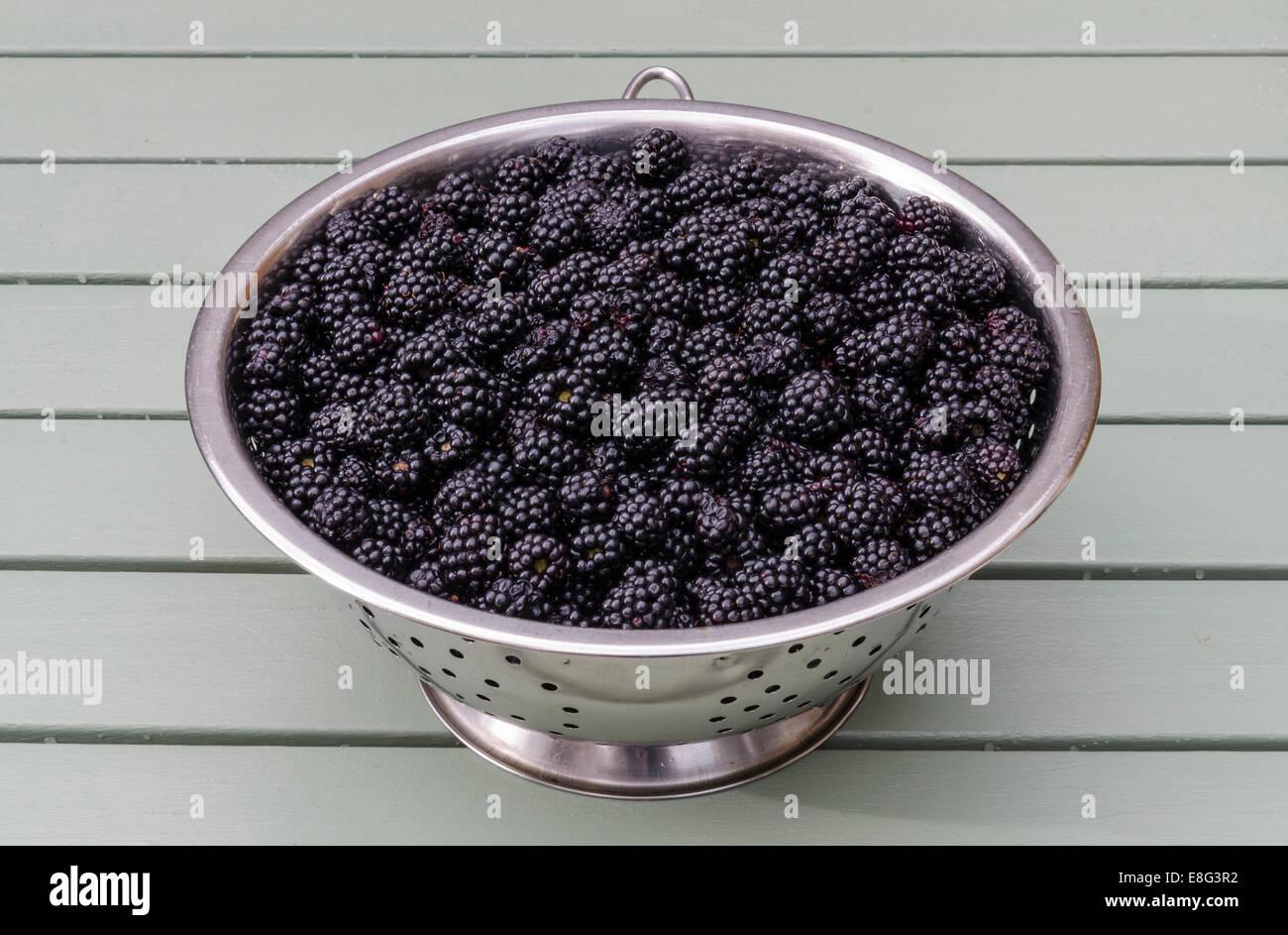 Bountiful supply of wild ripe fresh blackberries - Stock Image