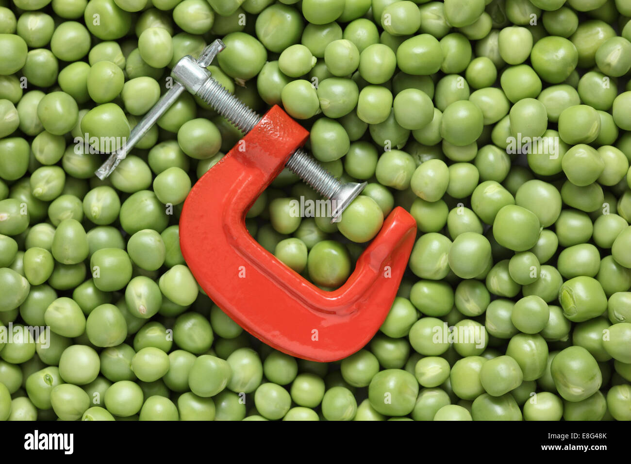 Green pea in a clamp on green peas background. Close-up. - Stock Image