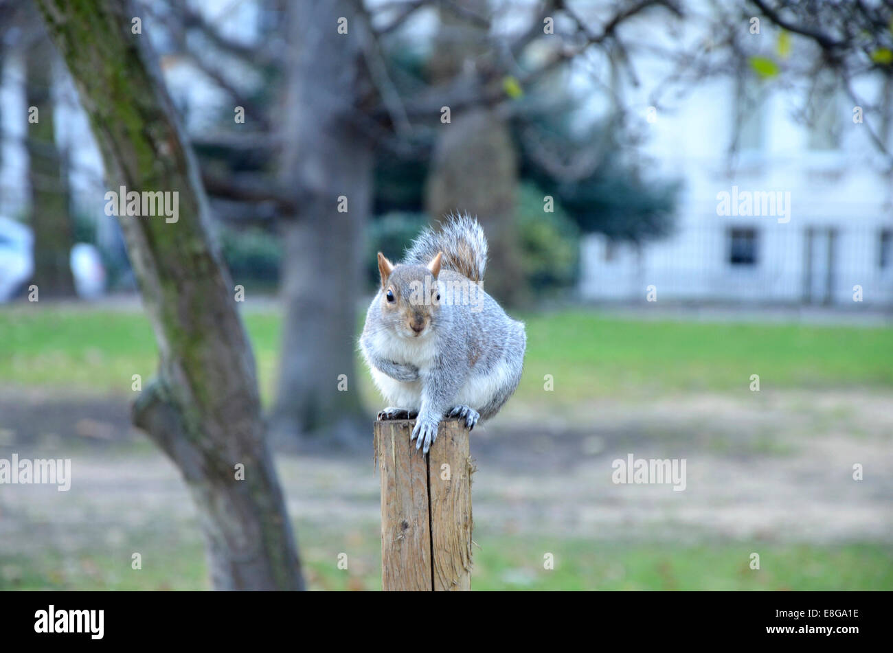 City Squirrel Stock Photos & City Squirrel Stock Images - Alamy