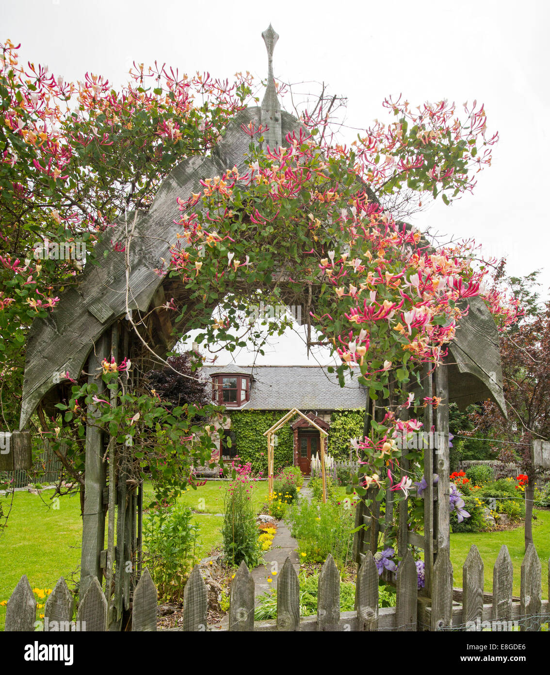 Honeysuckle, with colourful red and yellow flowers growing over wooden archway at entrance to garden of stone cottage - Stock Image