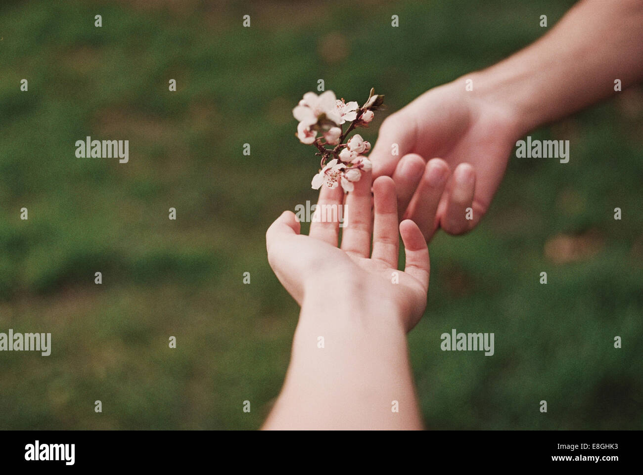 Two people sharing flower Stock Photo