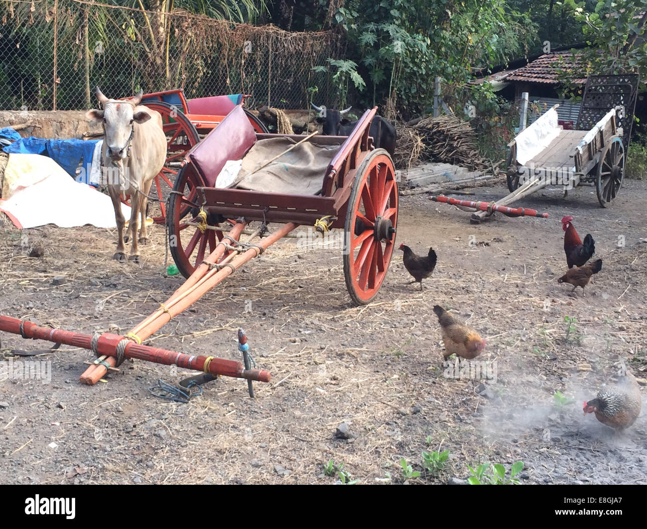 India, Maharashtra, Alibaug village, Yard outside village home - Stock Image