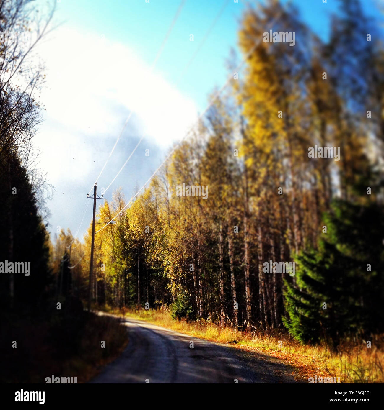 Country road through woods - Stock Image
