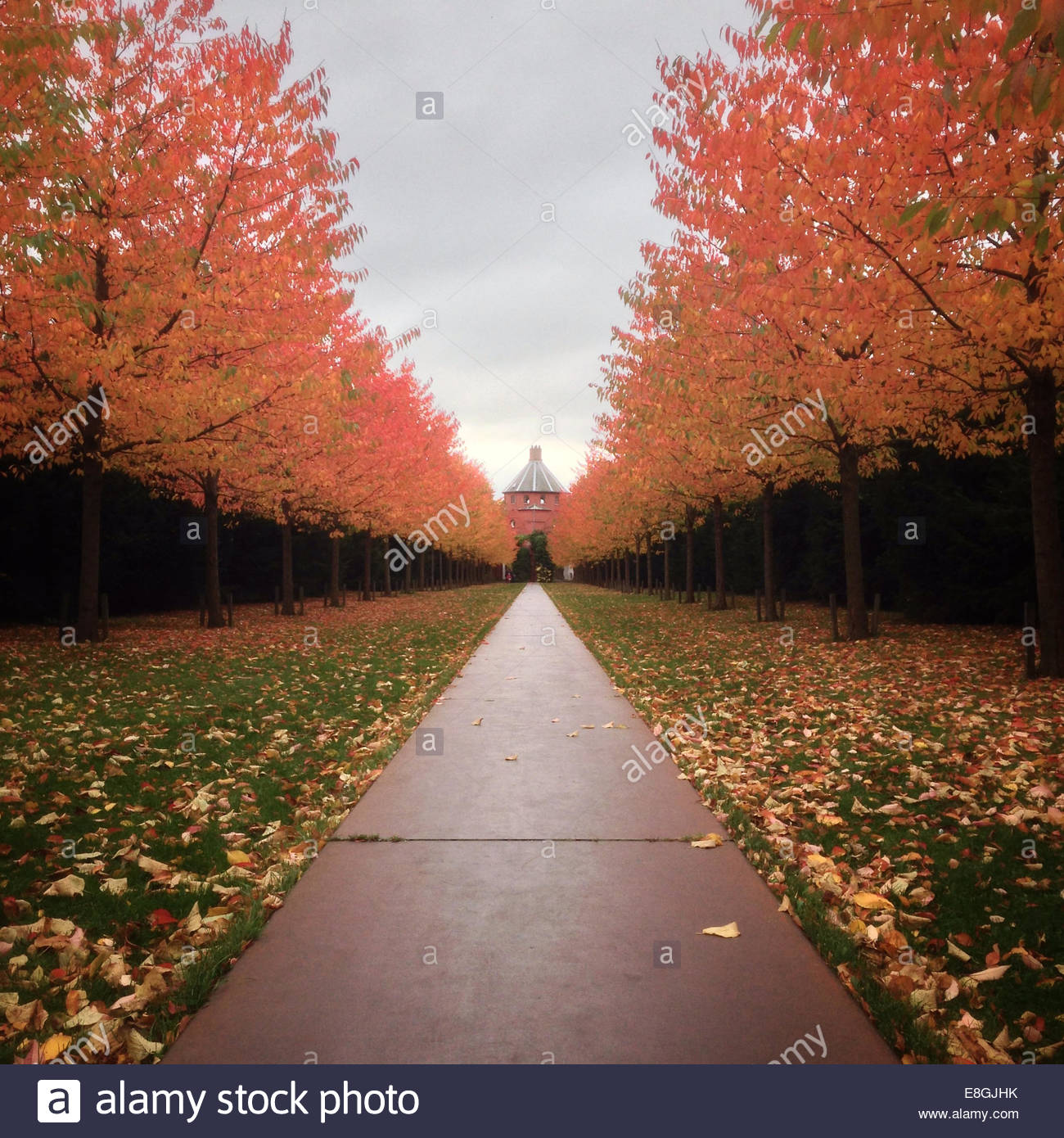 Denmark, Copenhagen, Park alley in autumn - Stock Image