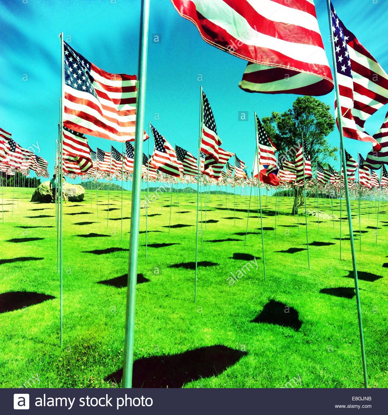 American flags on green meadow - Stock Image