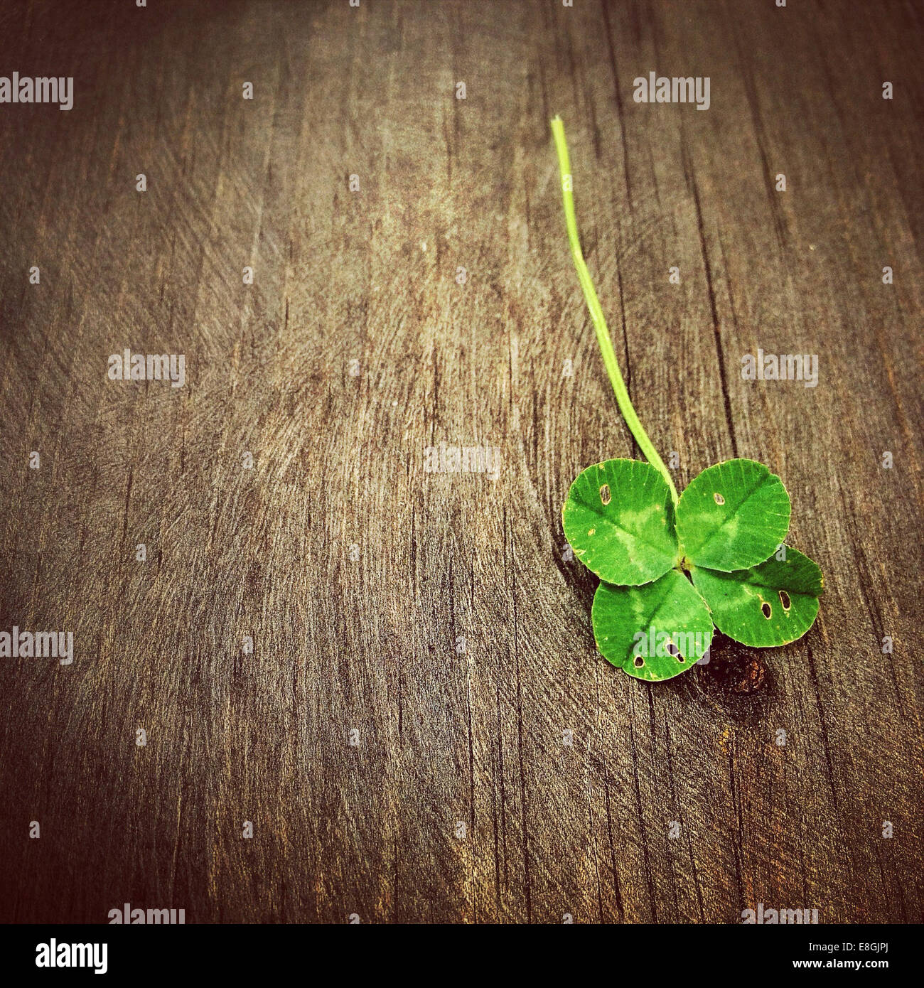 Four leaf clover on wooden table - Stock Image