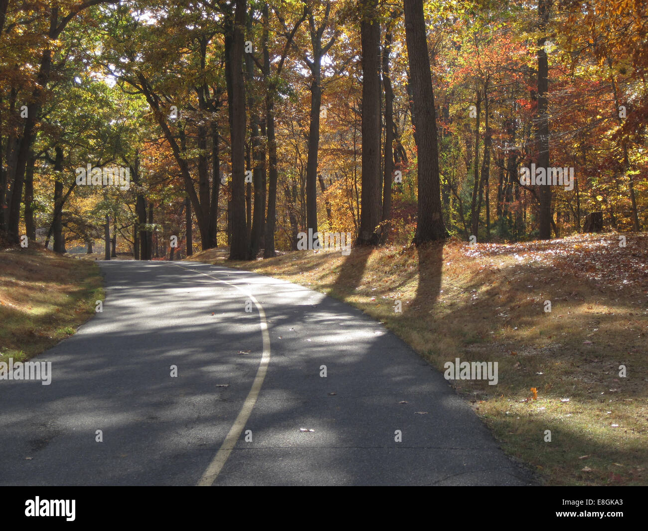 USA, New York State, Lloyd Harbor, Fall path and trees at park - Stock Image