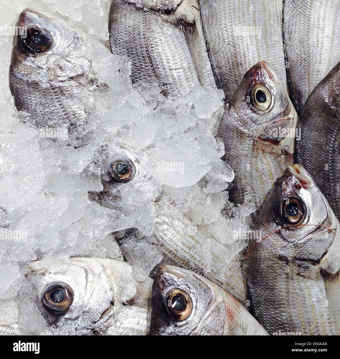 Dorada Fish At A Market In Spain - Stock Image