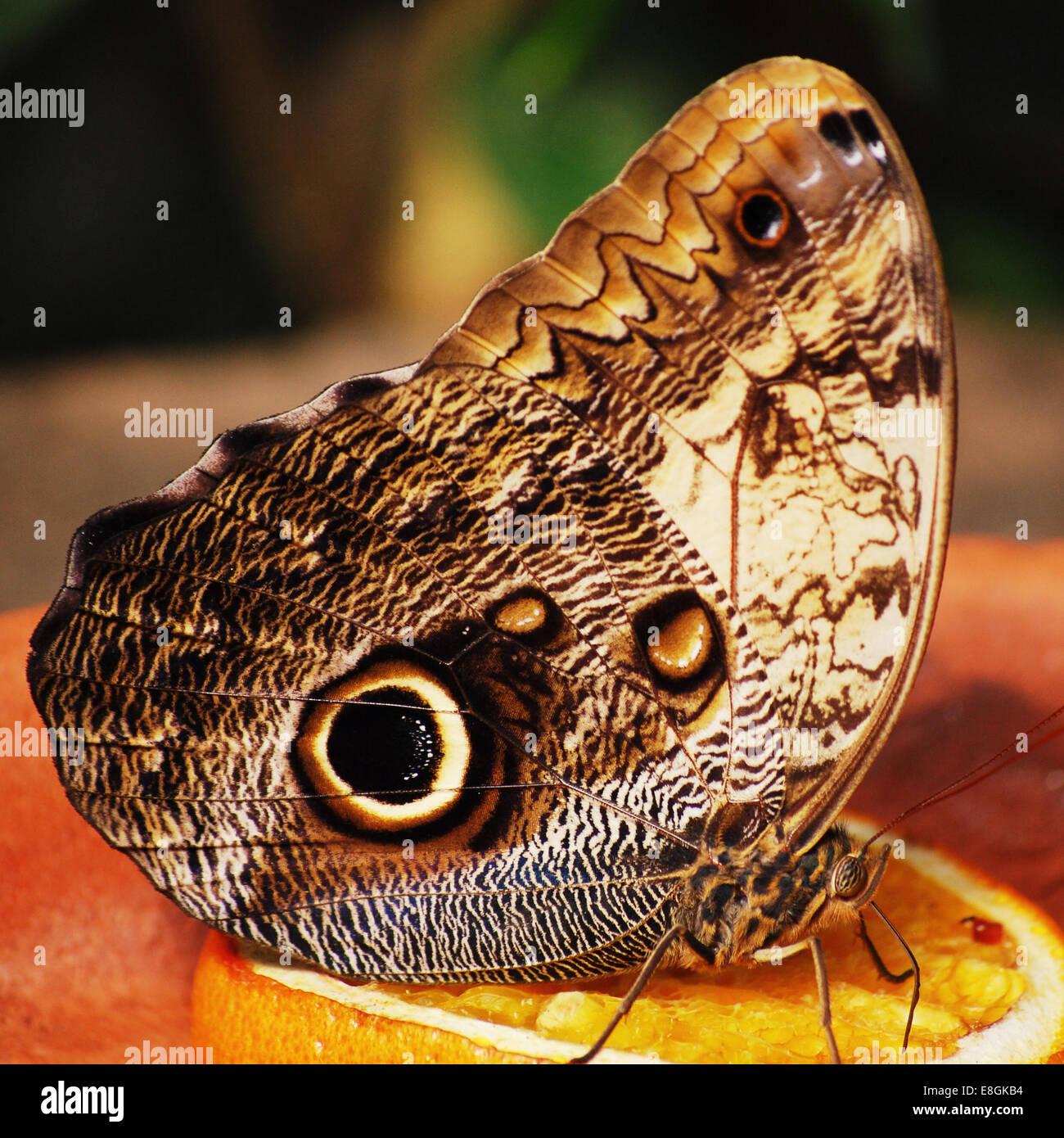 Butterfly on slice of orange Stock Photo