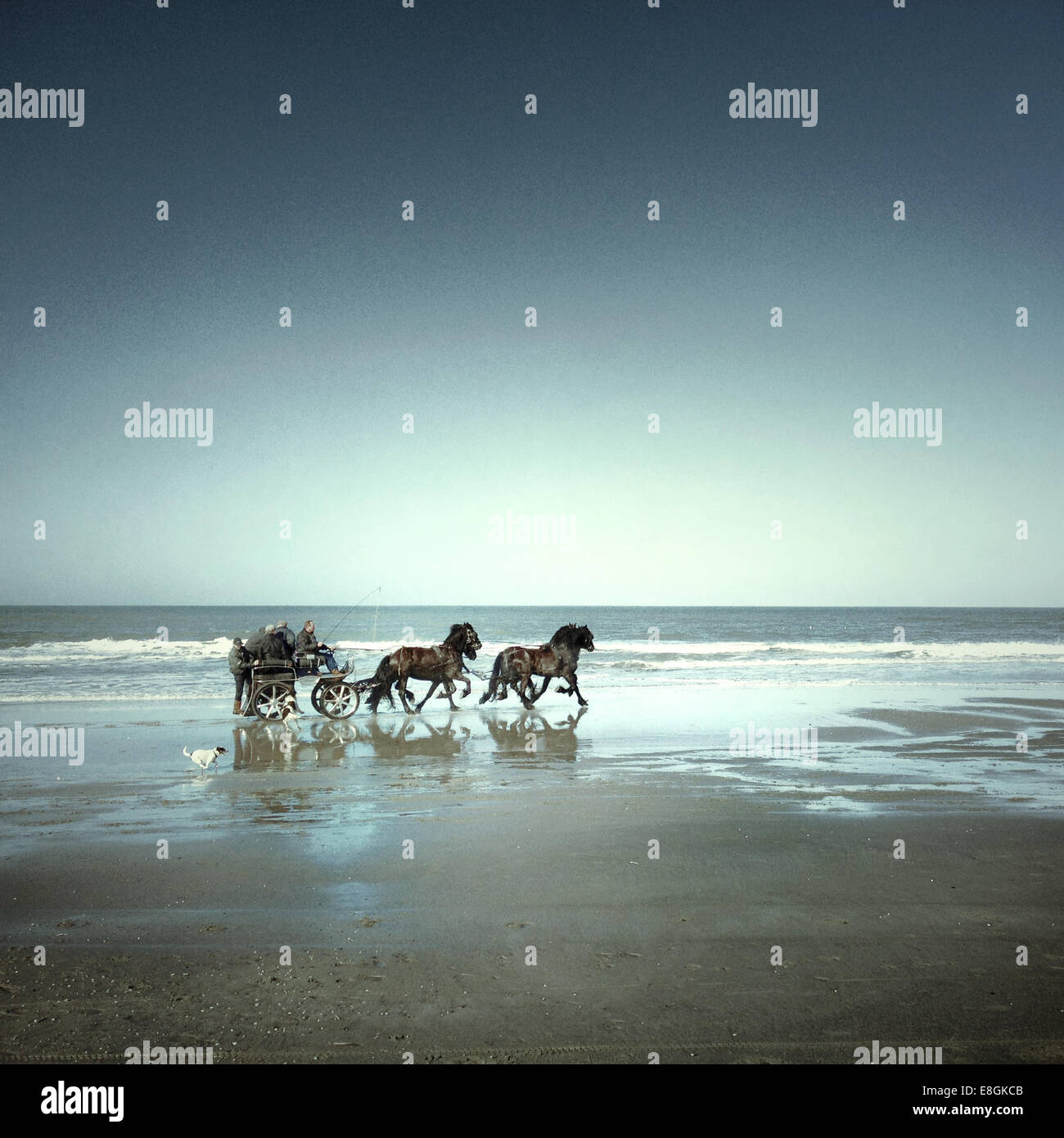 Horses and cart on beach - Stock Image