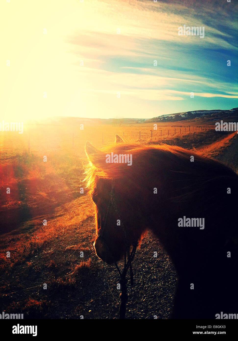 Canada, Alberta, Young horse at sunset - Stock Image