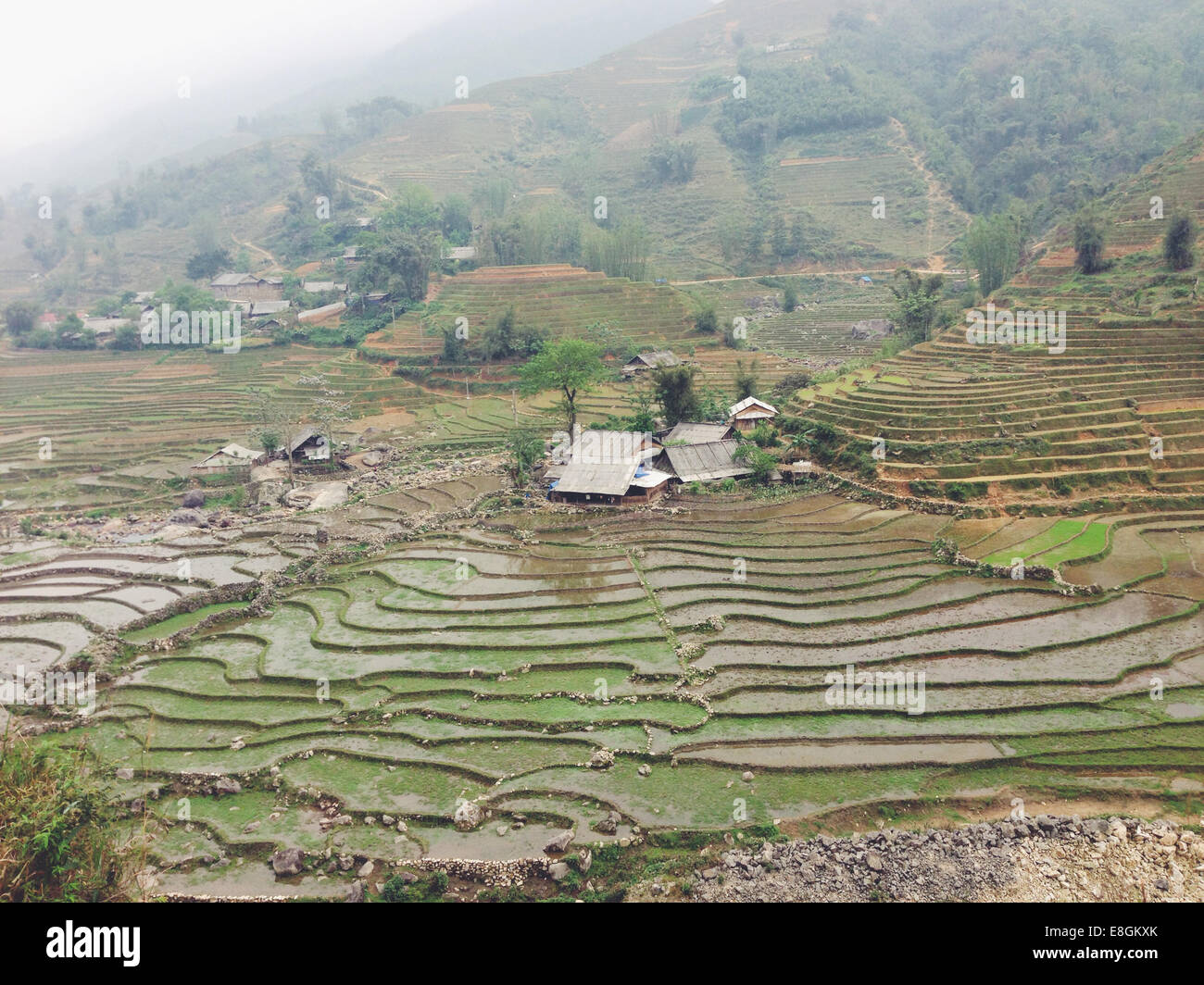 Vietnam, Lao Cai Province, Sa Pa, Landscape of typical vietnamese agriculture - Stock Image
