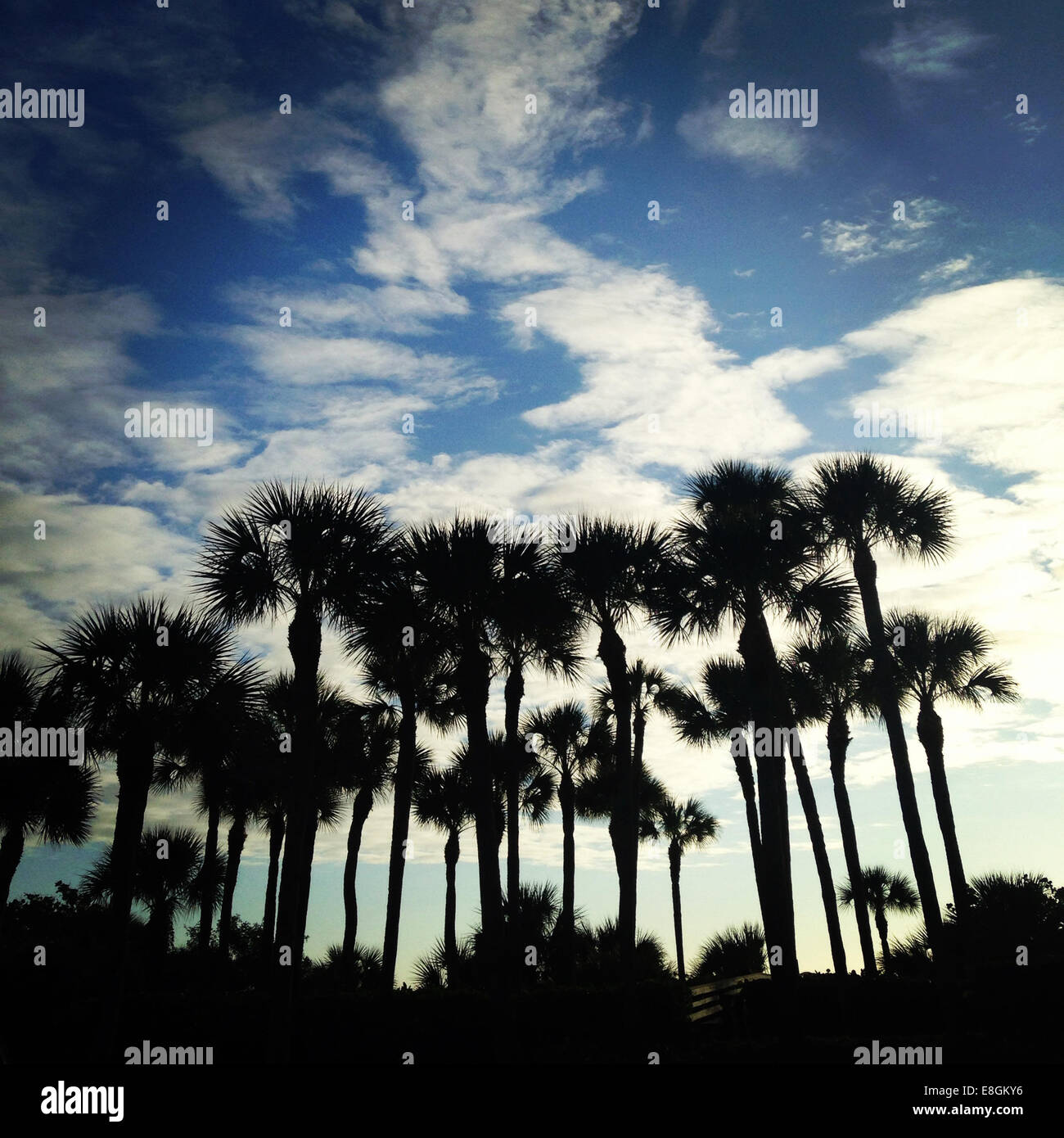 USA, Florida, Silhouette of palm trees Stock Photo