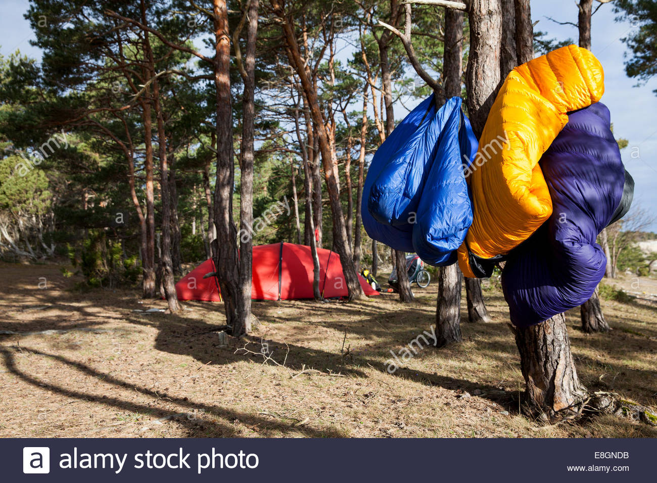 Camping equipment hanging on tree trunk in forest - Stock Image