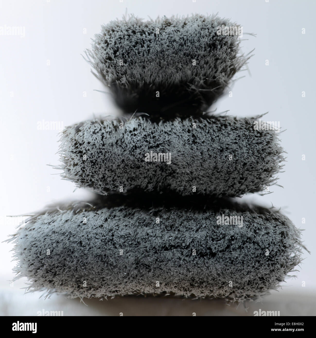 bristles on three paint brushes - Stock Image